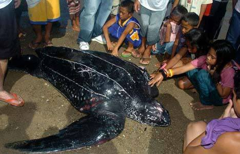 Black-Sea-Turtle (19-50)