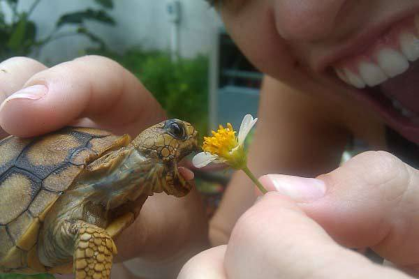 Home-Trained-Turtle-Eating-Flower (19-50)