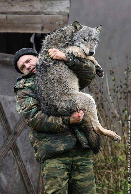 Soldier-Carrying-A-Wolf (19-50)
