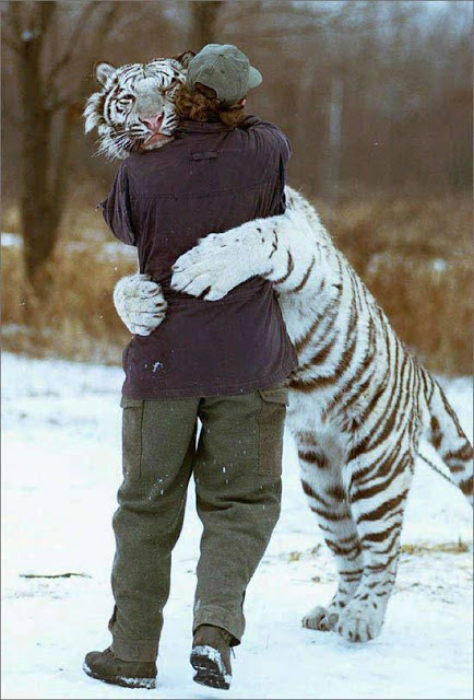 White-Tiger-Hugging-Trainer (19-50)
