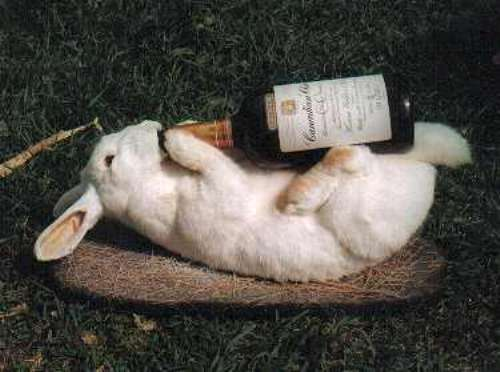 drunk-animals-24