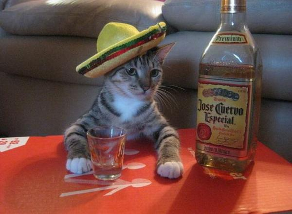 drunk-cat-funny-drinking