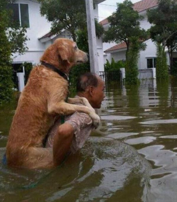 Animals Give Back Faith In Humanity